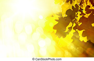 arte, hermoso, otoño, plano de fondo, con, roble sale