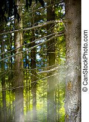 arte, montanha, floresta, abstratos, fundo