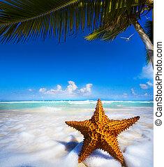 arte, praia, estrela, mar