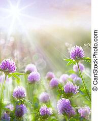 arte, primavera, natural, plano de fondo, trébol salvaje, flores