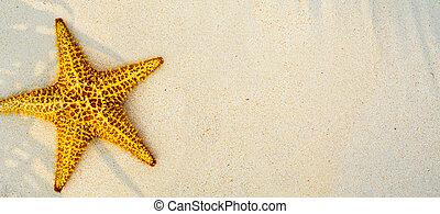 arte, verão, praia tropical, fundo