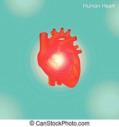 arterioso, arterie, widen, angioplastica, aterosclerosi,...