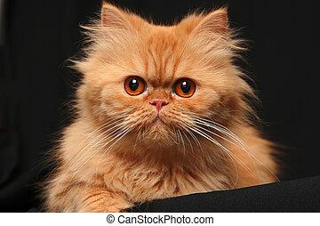 Artful cat - Portrait of a cat on a black background