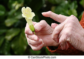 Arthritic hands with a flower. - Living with pain series. ...