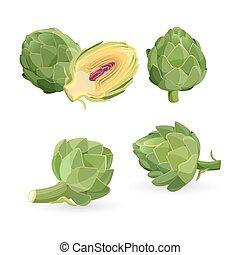 Artichoke green flower heads isolated. Vector illustration of edible vegetable