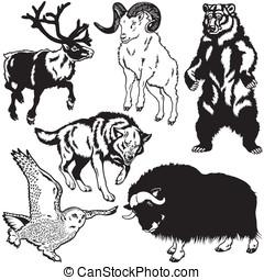artico, set, animali