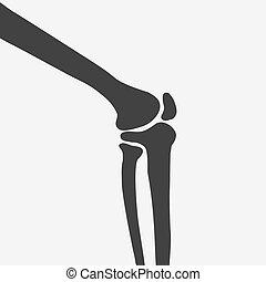 articulação joelho, lado, human, vista