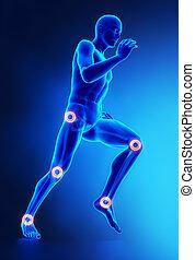articulaciones, lesión, concepto, pierna