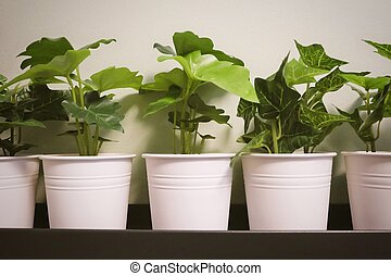 Artificial Alocasia and Golden Pothos Plant in Metal Pot