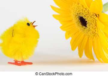 Artificial chicken and yellow gerbera