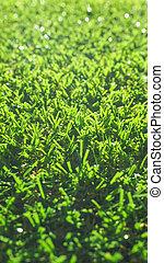 Artificial grass - Green artificial grass meadow useful as a...
