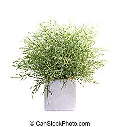 Artificial green flower plant in a pot