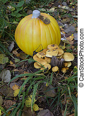 Pumpkin with yellow mushrooms