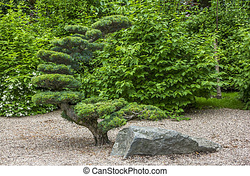 artificially shaped tree in a japanese garden and a rock