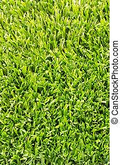 artificiel, champ, grass., arrière-plan vert, football