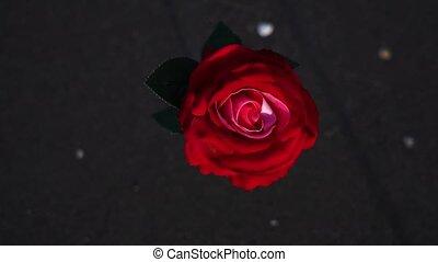 artificiel, rose, plage, rouges, océan, sable mouillé, stands, fleur