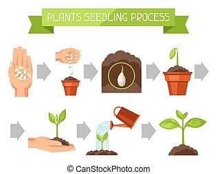 artikelen, plant, kiemplant, beeld, fasen, booklets,...