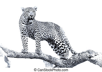 Artistic conversion of a leopard in big tree with thick branches