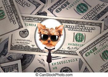 Artistic dollar bill with dog president background