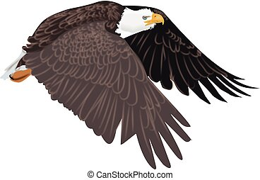Artistic drawing of American symbol of the wild bald eagle in flight with no background with white head and brown wings and feathers.