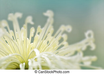 Artistic flower photograph