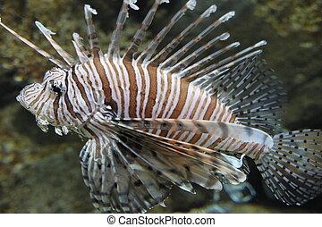 artistic n colorful fish