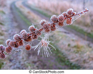 Artistic photo with a branch of grass in the frost on the background of the road