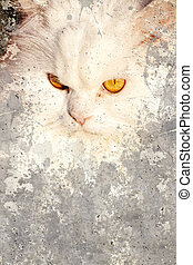Artistic portrait with textured background, beautiful white Persian cat