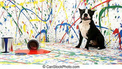 Artistic Pup - Black and white dog Boston Terrier on paint...