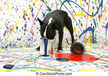 Artistic Pup - Black and white Boston Terrier on paint...