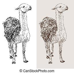 artwork lama, digital sketch of animal, realistic black and ...
