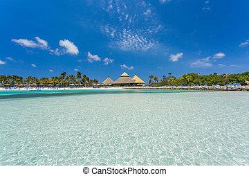 aruba, plage, île, flamant rose