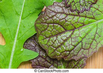 arugula and mustard leaves