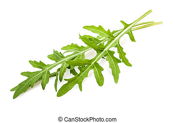 Arugula sprig isolated on white