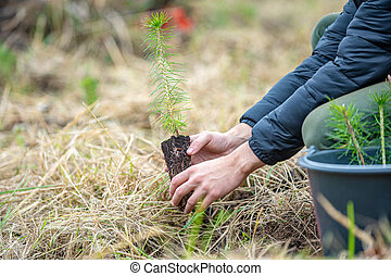As a volunteer, the young man plants young trees to restore the forest