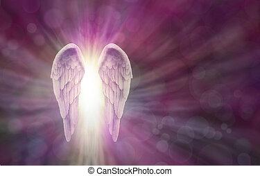 asas anjo, ligado, magenta, bokeh, bandeira