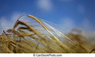 Wheaten cone - Ascending harvest of agricultural products....