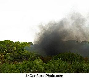 ascensions, dense, brûler, smoke., forêt, au-dessus, noir, lotissements