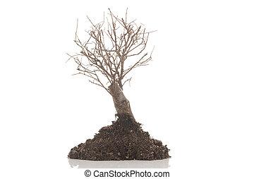 asciutto, albero