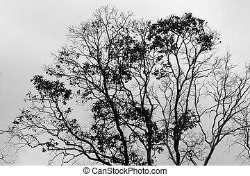 asciutto, albero, in, il, cielo