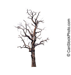 asciutto, albero, isolare, bianco, fondo