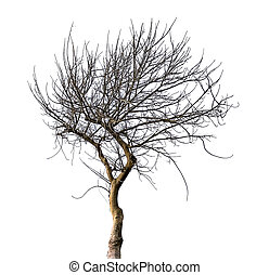 asciutto, albero, isolato, bianco, fondo