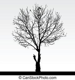 asciutto, albero, morto
