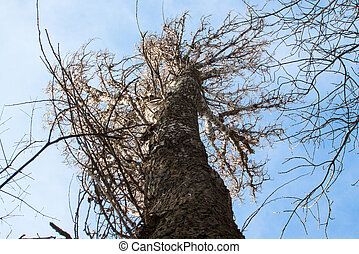 asciutto, albero., natura