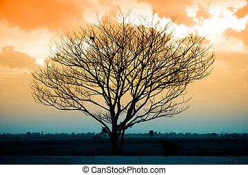asciutto, albero, silhouette, tramonto
