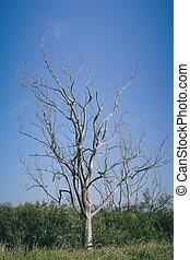 asciutto, albero, su, cielo blu, fondo