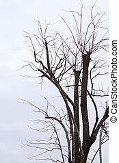 asciutto, albero, su, cielo grigio, fondo
