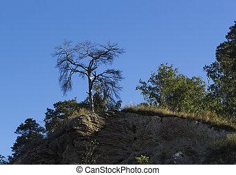 asciutto, albero, su, uno, fondo, di, cielo blu