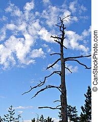 asciutto, albero, sullo sfondo, cielo blu