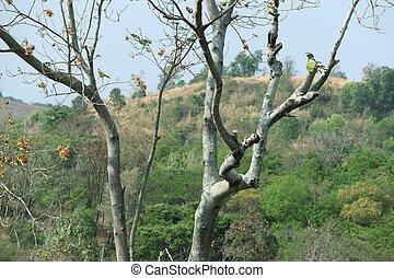 asciutto, albero tropicale
